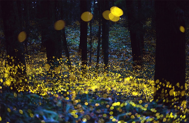17.) Fireflies are completely harmless. They don't even carry diseases.
