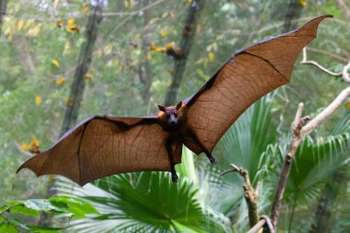 15.) The reason bats don't walk, is because they can't. Their leg bones are too thin.