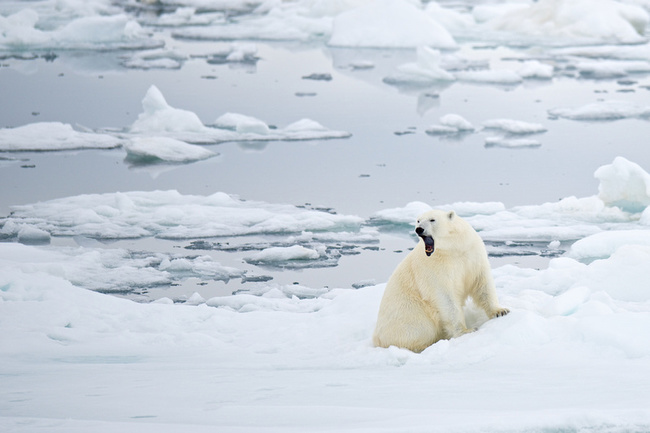 21.) Polar bears give off no detectable heat.