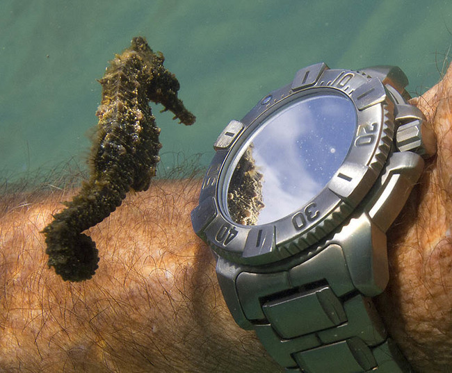 31. Sea horses are the slowest fish in the sea. They swim at only 0.01 MPH.