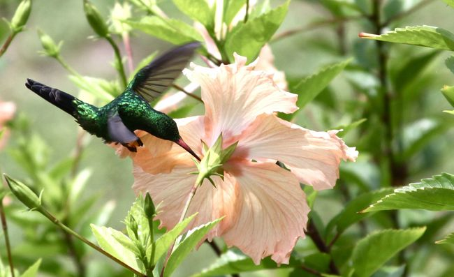 30.) Humming birds can fly backwards. They're the only birds who can do this.