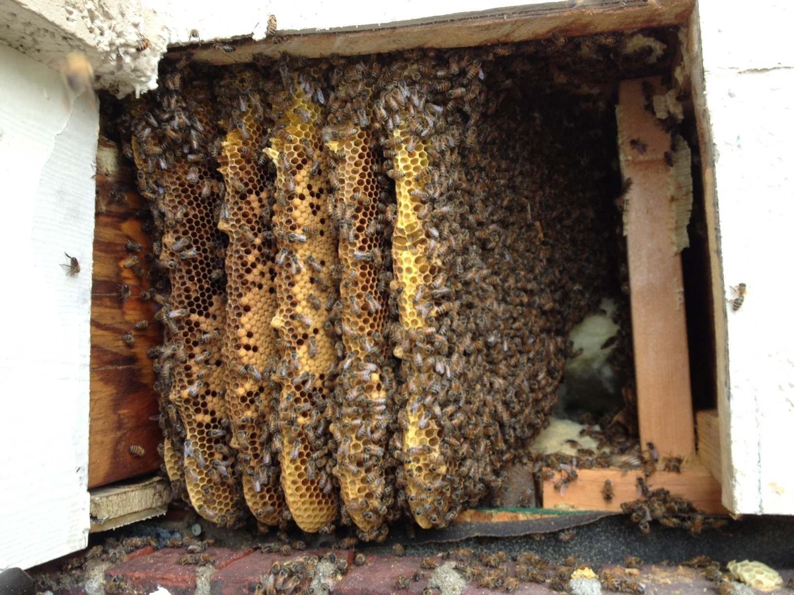 There's no way this hive is up to code. I see an eviction notice in their future.