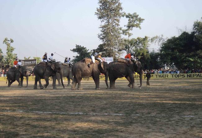 4.) Elephant polo: Pretty self explanatory. It's polo on Dumbos.