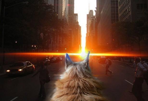 """Watching the """"Manhattanhenge"""" sunset."""