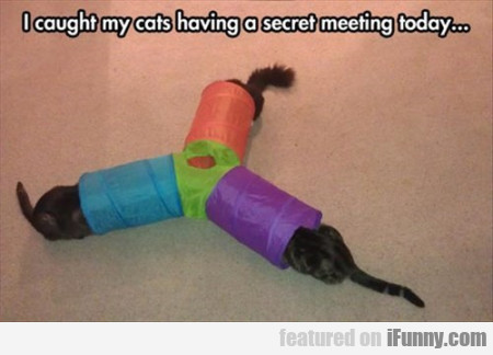 I Cought My Cats Having A Secret Meeting